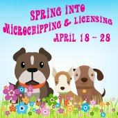 Spring into Microchipping and Licensing
