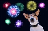 Microchip your pet before the 4th of July