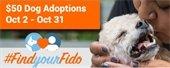 FindyourFido Adoption event