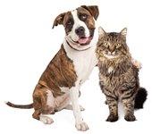 February Pet Adoption Promotion