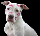 Big Love Pet Adoption