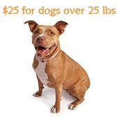 $25 adoptions for dogs over 25lbs