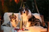 Keeping your pets safe on New Year's Eve