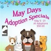 May Days Pet Adoptions