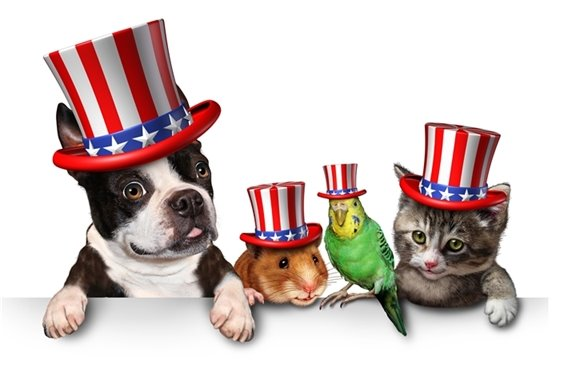 Animals dressed for july 4th