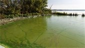 Beware of Blue Green Algae