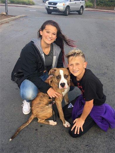 Adopted Dog, Bronco
