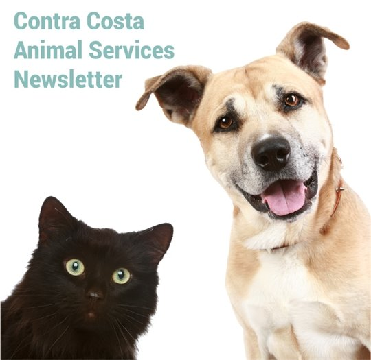 Contra Costa Animal Services Newsletter