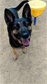 Blog: A Dog Named Wanda