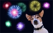 Dog with fireworks in the background