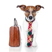 Dog with Briefcase