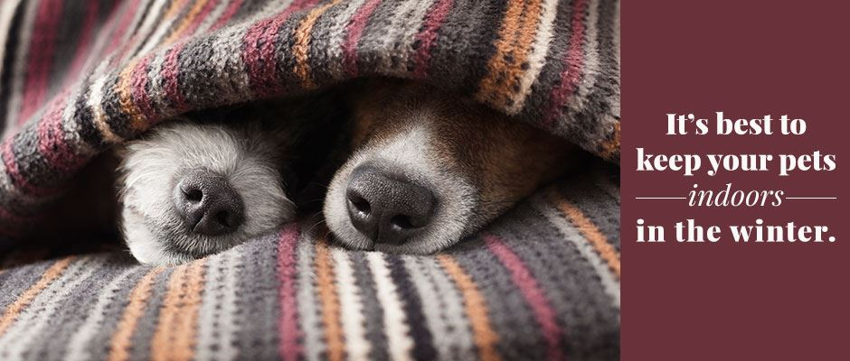 "Two pup noses sticking out from under a blanket with text ""It's best to keep your pets indoors in the winter."""