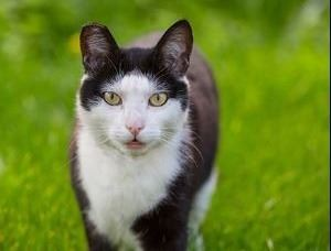 Stray/Feral Cats & Kittens | Contra Costa County, CA