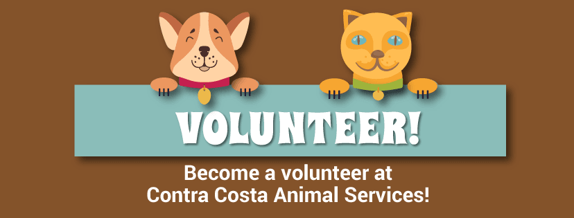 Volunteer! Become a volunteer at Contra Costa Animal Services!