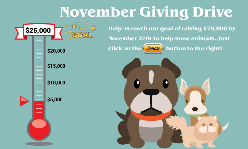 November Giving Drive for the Animals