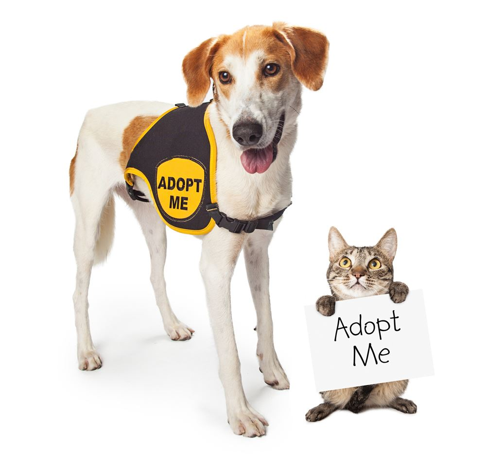 dog-cat-waiting-for-adoption