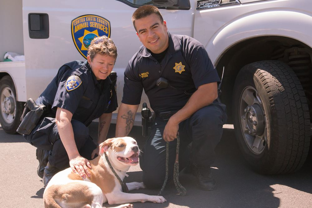 Animal Control Officers petting a dog