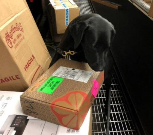 Canine Major alerting on agricultural product inside a parcel at a shipping terminal