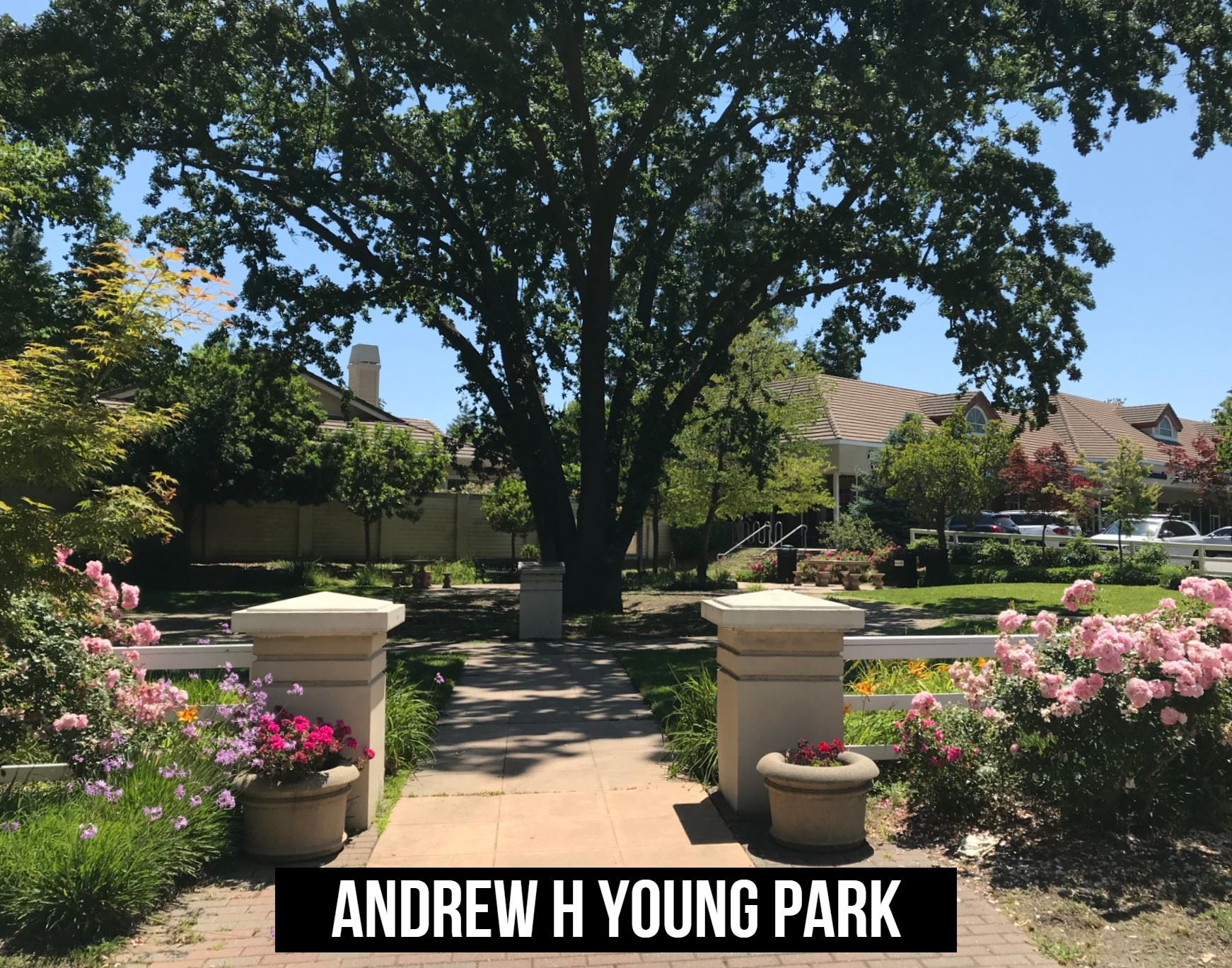 Andrew H Young Park