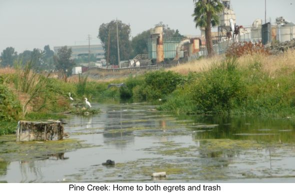 Pine Creek - Home to Egrets and Trash