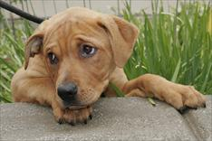 Puppy leans its head on its paw making a sweet puppy face