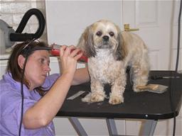 pet groomer 1011_thumb.jpg